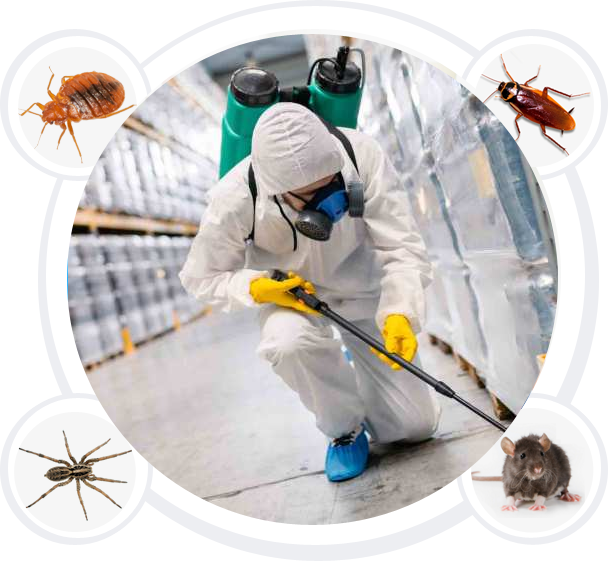 Exterminator analyzing industrial floors for signs of pests such as rats, spiders, or cockroaches.