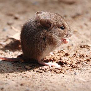cute mice is eating