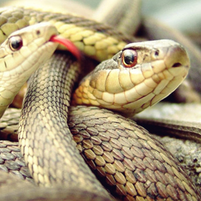 snake caught on camera