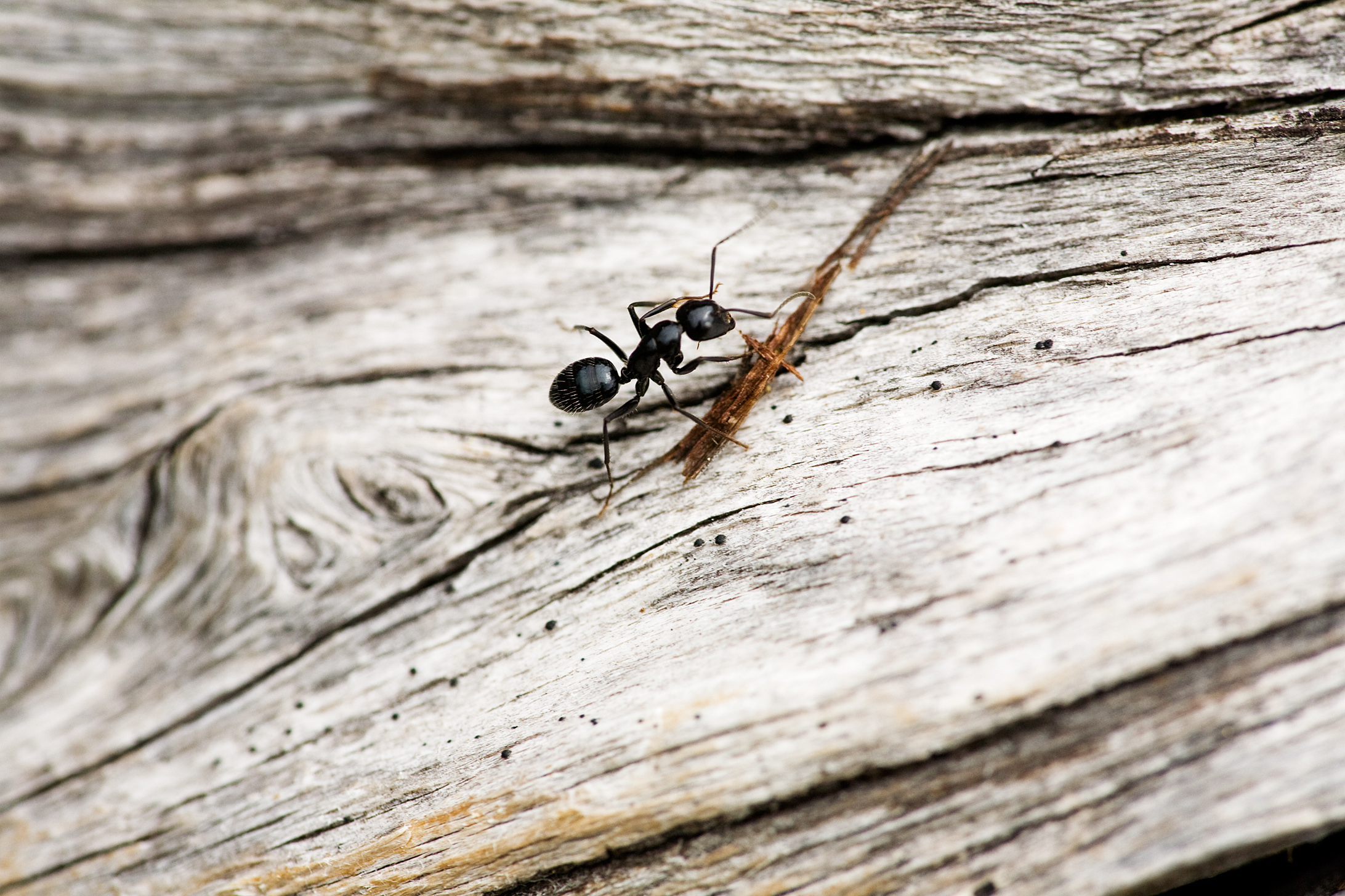 nt crawling on a piece of wood