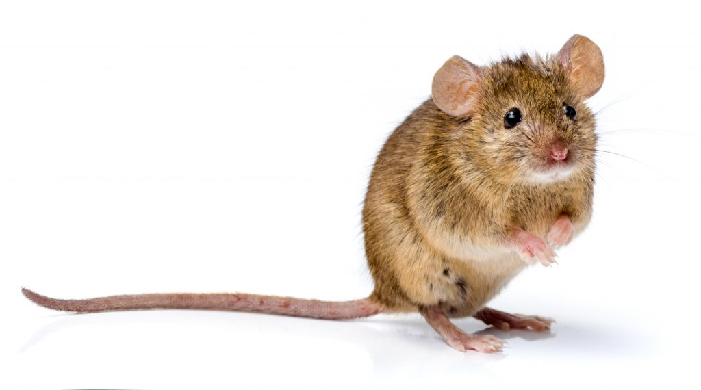 Mouse Caught on Camera