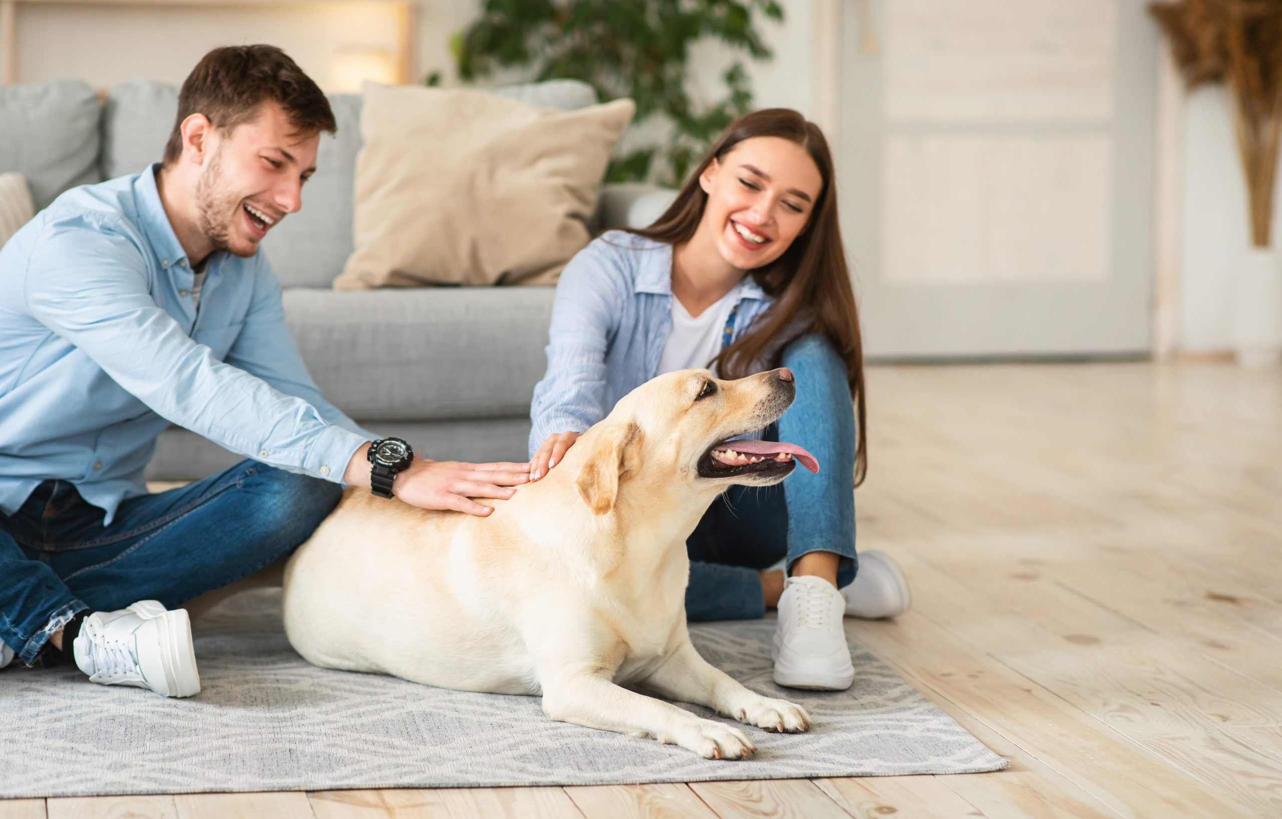 Love for Animals Concept. Beautiful woman and man sitting on the floor hugging their adorable golden retriever dog at home. Lifestyle Indoors. Copy space. Portrait of couple playing with puppy